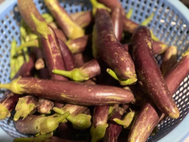 Có sở thích trồng cây, hoa hậu bí ẩn nhất Việt Nam sở hữu cả vườn rau quả sạch xanh mướt mắt khó ai bì kịp - Ảnh 8.