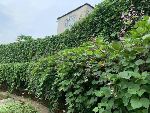 Có sở thích trồng cây, hoa hậu bí ẩn nhất Việt Nam sở hữu cả vườn rau quả sạch xanh mướt mắt khó ai bì kịp - Ảnh 3.