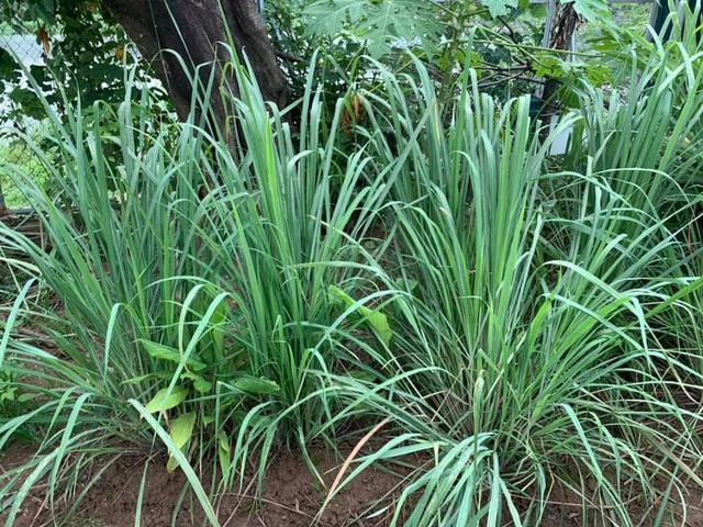 Có sở thích trồng cây, hoa hậu bí ẩn nhất Việt Nam sở hữu cả vườn rau quả sạch xanh mướt mắt khó ai bì kịp - Ảnh 12.