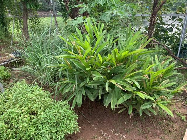 Có sở thích trồng cây, hoa hậu bí ẩn nhất Việt Nam sở hữu cả vườn rau quả sạch xanh mướt mắt khó ai bì kịp - Ảnh 10.