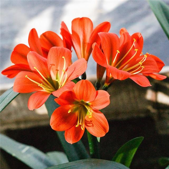 Trồng ngay loài hoa vừa sang trọng, yêu kiều vừa mang phong thủy tốt, rước quý nhân vào nhà bạn - Ảnh 2.