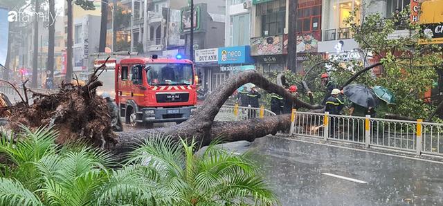 TP.HCM: Cây xanh bất ngờ bật gốc đổ ngang đường trong mưa to gió lớn, đè trúng 1 người đi xe máy - Ảnh 1.