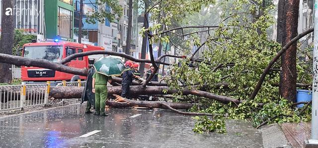 TP.HCM: Cây xanh bất ngờ bật gốc đổ ngang đường trong mưa to gió lớn, đè trúng 1 người đi xe máy - Ảnh 3.