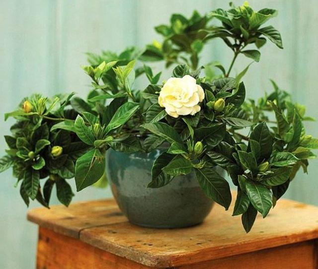 7 loại cây nên trồng trong nhà vào mùa đông - Ảnh 1.