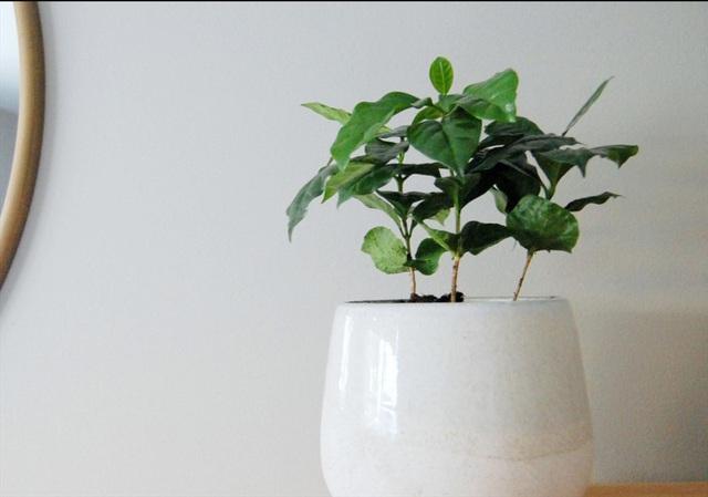 7 loại cây nên trồng trong nhà vào mùa đông - Ảnh 4.