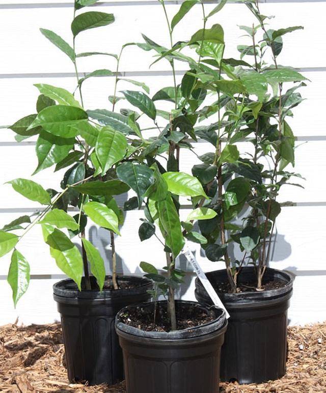 7 loại cây nên trồng trong nhà vào mùa đông - Ảnh 5.
