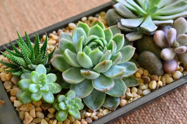 7 loại cây nên trồng trong nhà vào mùa đông - Ảnh 7.