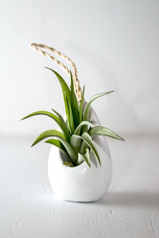 Những mẫu bình hoa độc đáo giúp làm đẹp ngôi nhà - Ảnh 9.