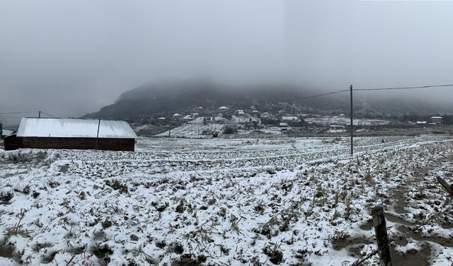 ẢNH: Tuyết phủ trắng, Lào Cai đẹp như trời Âu, người nông dân lại khóc ròng chịu cảnh rau màu bị thiệt hại nặng - Ảnh 3.