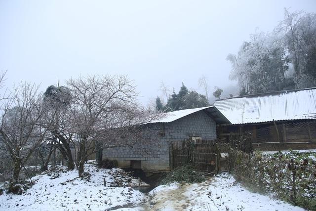 ẢNH: Tuyết phủ trắng, Lào Cai đẹp như trời Âu, người nông dân lại khóc ròng chịu cảnh rau màu bị thiệt hại nặng - Ảnh 6.