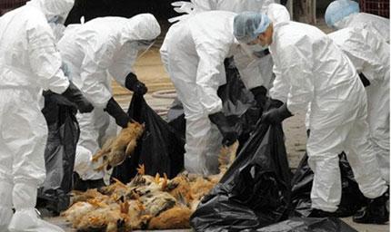 Việt Nam chủ động đối phó với dịch bệnh 1