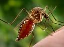 Dấu hiệu khác biệt giữa sốt virut và sốt xuất huyết ai cũng cần lưu tâm