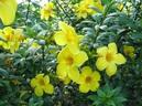 Các cây hoa độc không nên trồng trong khuôn viên nhà, trường học - GDN