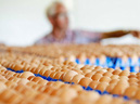 Trứng gà nhiễm thuốc trừ sâu: Vì sao và độc đến đâu? - GDN