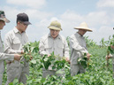 Vùng trồng đ�u nành dược liệu của Bảo Xuân ch�nh thức được công nh�n đạt chuẩn GACP – WHO