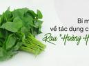 """Loại cây dân dã được gọi là rau """"Hoàng h�u"""" nhờ 6 tác dụng tuyệt vời có thể bạn chưa biết"""