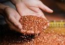 Sự thật chỉ ăn gạo lứt muối mè sẽ khỏi ung thư?