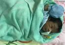 Người cứu bé trai sơ sinh bị chôn sống: Khi bế lên cháu cất tiếng khóc