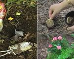 7 tác dụng chẳng ai ngờ tới của bã trà túi lọc trong việc làm vườn