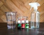 Không cần hóa chất vẫn có thể đuổi sạch bong lũ bọ, kiến, gián trong nhà với duy nhất một thứ...
