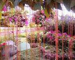 Khu vườn rợp hoa như công viên thu nhỏ của chàng trai 9X ở Tây Ninh