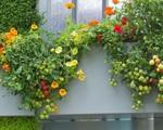 10 cách trồng rau quả đẹp như trồng hoa