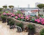 Chuyển hàng tấn đất làm ao sen, trồng hồng trên sân thượng, mẹ HN xây 'thiên đường' phủ kín hoa