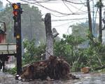 Diễn biến nguy hiểm của bão số 9: Gió giật mạnh, nhà sập, thuyền hư hỏng