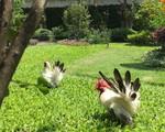 Vườn như công viên nhỏ trên sân thượng gia đình ở TP HCM