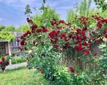 Khu vườn 200m² với đủ loại rau trái, hoa tươi của mẹ Việt bỏ ra 8 năm trời để chăm bón
