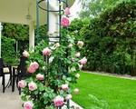Ngôi nhà với khu vườn 600m² phủ kín các loại hoa đẹp như tranh vẽ của nữ giám đốc Việt ở Hungary