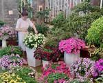 Biệt thự phủ kín hoa dạ yến thảo, triệu chuông của bà nội trợ ở Đắk Lắk