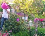 Ông bố Việt sở hữu vườn rau sạch ăn quanh năm không hết ở Đức