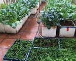 'Nông trại trên cao' với bạt ngàn rau sạch và quả ngọt bà cất công trồng để đảm bảo sức khỏe cho cháu yêu