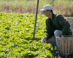 Ông bố trẻ vì gia đình, bỏ cuộc sống phiêu du về quê thuê trang trại 166 nghìn m² trồng rau, thả cá