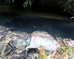 Khi phát hiện dầu thải chảy vào dòng nước, Viwasupco đã xử lý như thế nào?