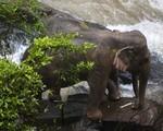 6 con voi chết vì cứu nhau khi ngã xuống thác nước tử thần ở Thái