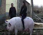 Đẩy mạnh giống lợn 500-750 kg mỗi con trong cơn khủng hoảng thịt lợn