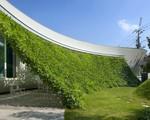 Ngôi nhà vườn hình thuyền độc đáo với điểm nhấn từ giàn cây leo xanh tươi mát mắt
