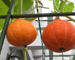 n13-1554434810016425691117-crop-15544348371861523811434.jpg