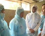 Dịch tả lợn châu Phi xâm nhiễm lần đầu, người chăn nuôi ở Hà Giang 'đứng ngồi không yên'