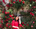 Giàn hoa hồng nghìn bông được người chồng ngày đêm chăm sóc để tặng vợ