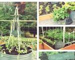 Dù không có nhiều kinh nghiệm trong trồng rau thì với 10 mẹo dưới đây bạn vẫn có thể sở hữu một vườn rau tươi tốt
