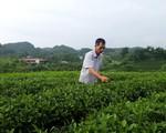 Thái Nguyên: Sử dụng hiệu quả vốn vay từ Quỹ Quốc gia về việc làm