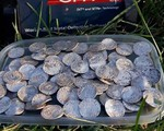 Đào được kho báu giá trị 6 triệu USD nhờ máy phát hiện kim loại