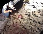 Phút hãi hùng của người chứng kiến bé trai 7 tuổi thiệt mạng vì đàn chó dữ tấn công