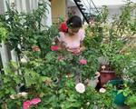 Lạc lối khi bước vào vườn hồng trên sân thượng của bà mẹ hai con ở TP. HCM