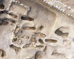 Phát hiện ngôi mộ tập thể chứa hài cốt 227 đứa trẻ, tiết lộ sự thật rùng rợn về nghi lễ hiến tế mê tín ngàn năm trước