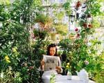 Khu vườn 30m² muôn hoa đua nở trên sân thượng của mẹ đảm thích mộng mơ ở TP. HCM