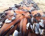 Choáng với cái giá 'trên trời' của những loài sinh vật biển đắt nhất thế giới